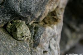 frog_web